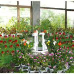 National Flower Exhibition Held
