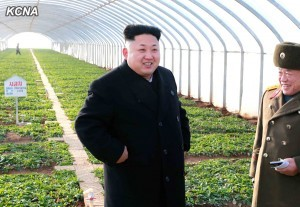 Kim Jong Un, first secretary of the Workers' Party of Korea, first chairman of the DPRK National Defence Commission and supreme commander of the Korean People's Army (KPA), gave field guidance to the newly-built vegetable greenhouses at the June 8 Farm of the KPA. He was very pleased to see the greenhouses in rows, saying that they were built neatly and they look like a picture. Going round different parts of the greenhouses, he acquainted himself in detail with their construction and vegetable growing. The greenhouses, built in a hill-area to make better use of land, are spectacular when they are looked up or down, he said. They are flawless in every aspect, he said, adding: It is important to build a greenhouse well but more important is to do farming well there so that the servicepersons can get a great benefit from it. In order to ensure the effective greenhouse farming, it is necessary to pay attention to the work for raising the responsibility and technical knowledge of farmers, he said, stressing the need to actively introduce advanced farming methods in cooperation with vegetable science institutes so as to put the scientification and intensification of greenhouse farming on a higher level. Efforts should be directed to the scientific and technological distribution to fan up the flame of collective innovation in the supply service of the people's army, he said, giving an instruction to found a monthly magazine that explains about the Party's policy related to the supply service and indicates tasks and ways for its implementation and introduces advanced science and technology and good experiences. He gave thanks of the supreme commander to the units involved in the construction of vegetable greenhouses. He said: The vegetable greenhouses newly built at the June 8 Farm well show how the People's Army approaches and implements the Party's policy. The army makes it an inveterate habit to carry out any order, policy and instruction of the Party at once and perfectly and report about the results. This is just the revolutionary soldier spirit. Terming the vegetable greenhouses of the June 8 Farm a standard and model one, he called for conducting a vigorous drive to supply fresh vegetable to the people in all seasons by making the example of the KPA spread across the country like wildfire. He was accompanied by Hwang Pyong So, Hyon Yong Chol, Pak Yong Sik, Han Kwang Sang and Ri Jae Il. -0-