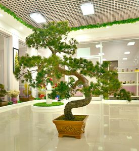 Dried Pine for Interior Decoration